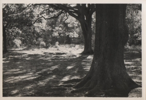 Original photograph of Southborough Common 28/8/1960.