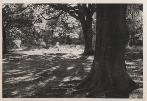 Original photograph of Southborough Common 28/8/1960.